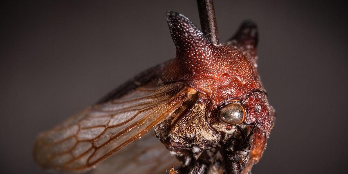 Little Monsters Just Got Littler: Meet the Lady Gaga Bug
