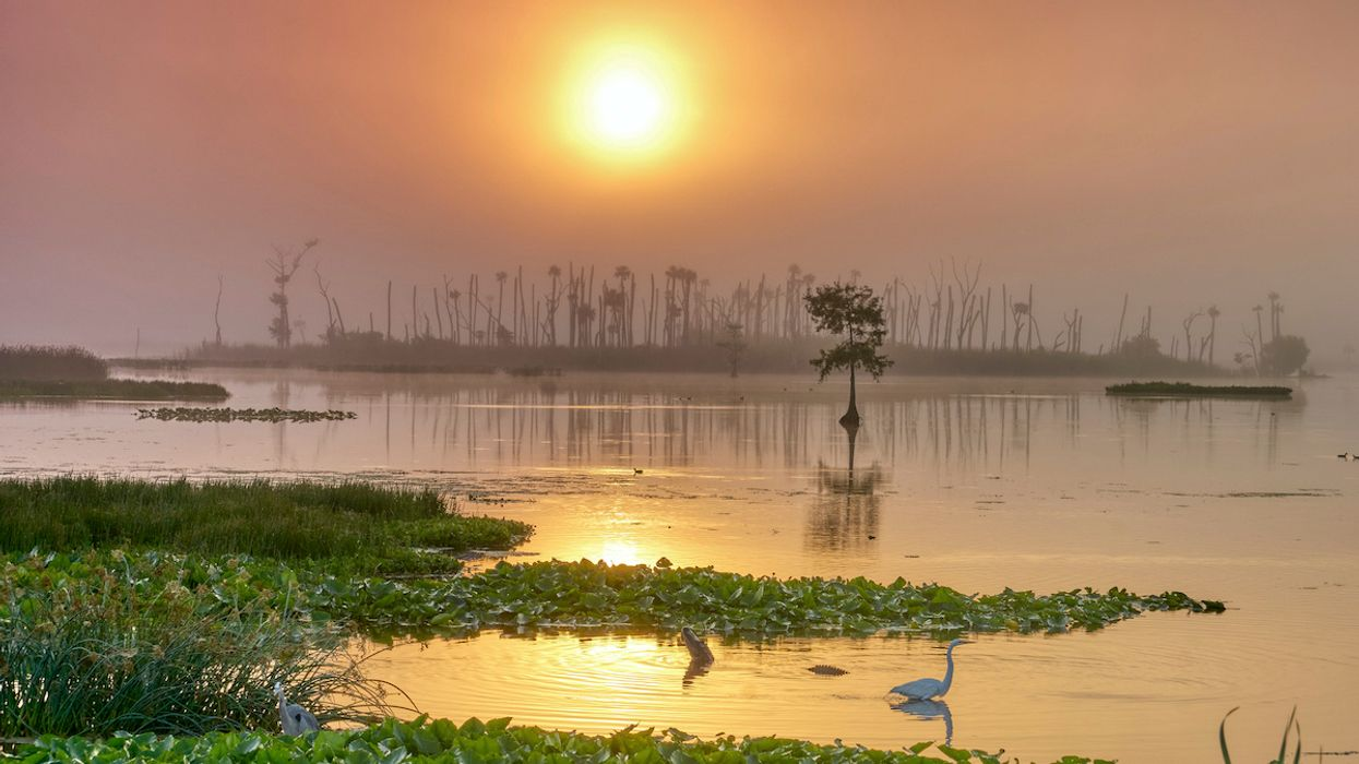 Protecting Wetlands Yields Staggering Economic Benefit, Study Finds