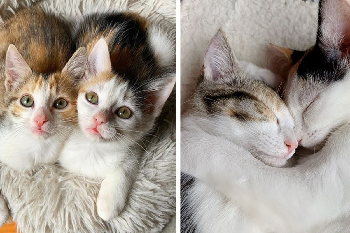 Kittens Rescued from Parking Lot Won't Leave Each Other's Side - Waiting for a Home