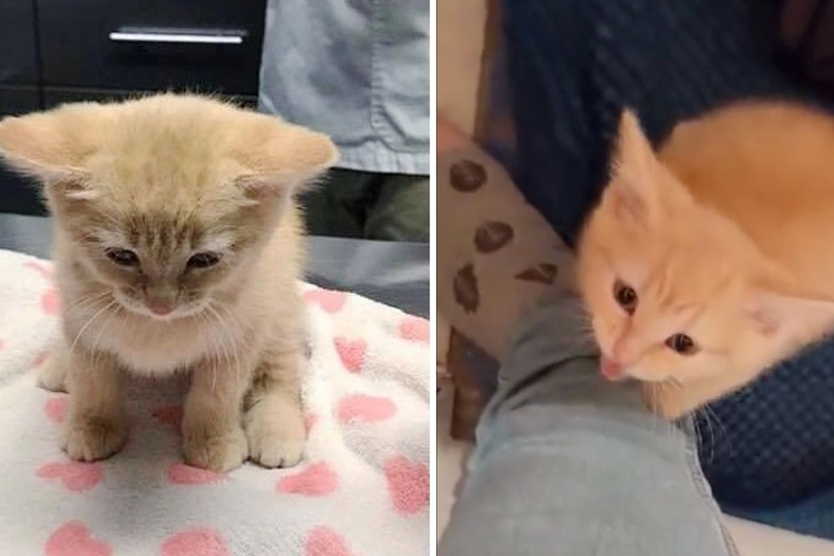 Shy Kitten Asks for Cuddles After She Was Rescued from Uncertain Fate