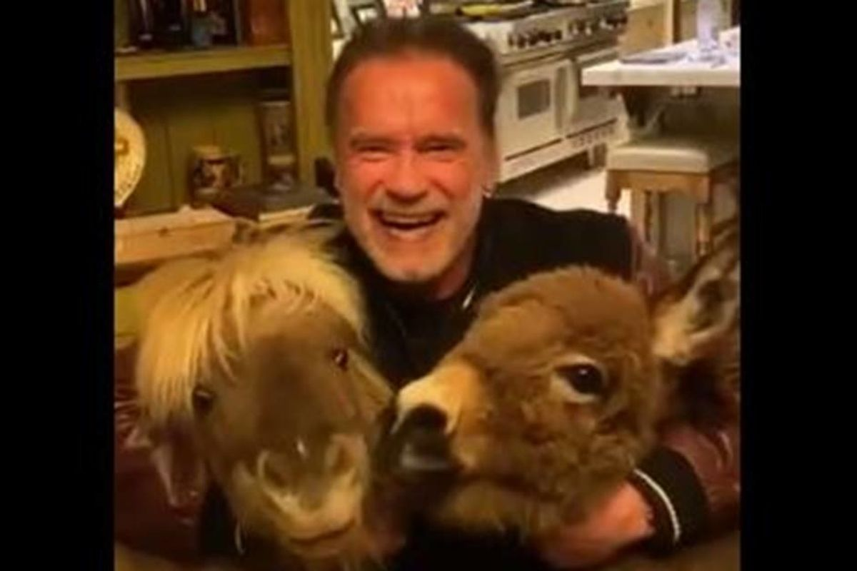 Arnold Schwarzenegger recruited his mini horses for a vital message about staying at home