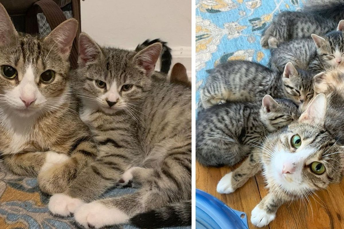 Cat Found With Her Kittens in Impounded Car Has Her Dream Come True