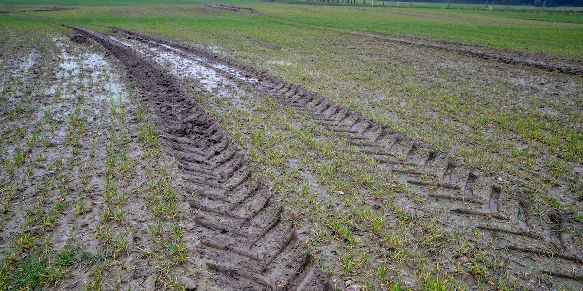 Protecting and Restoring Soils Could Remove 5.5 Billion Tonnes of CO2 a Year