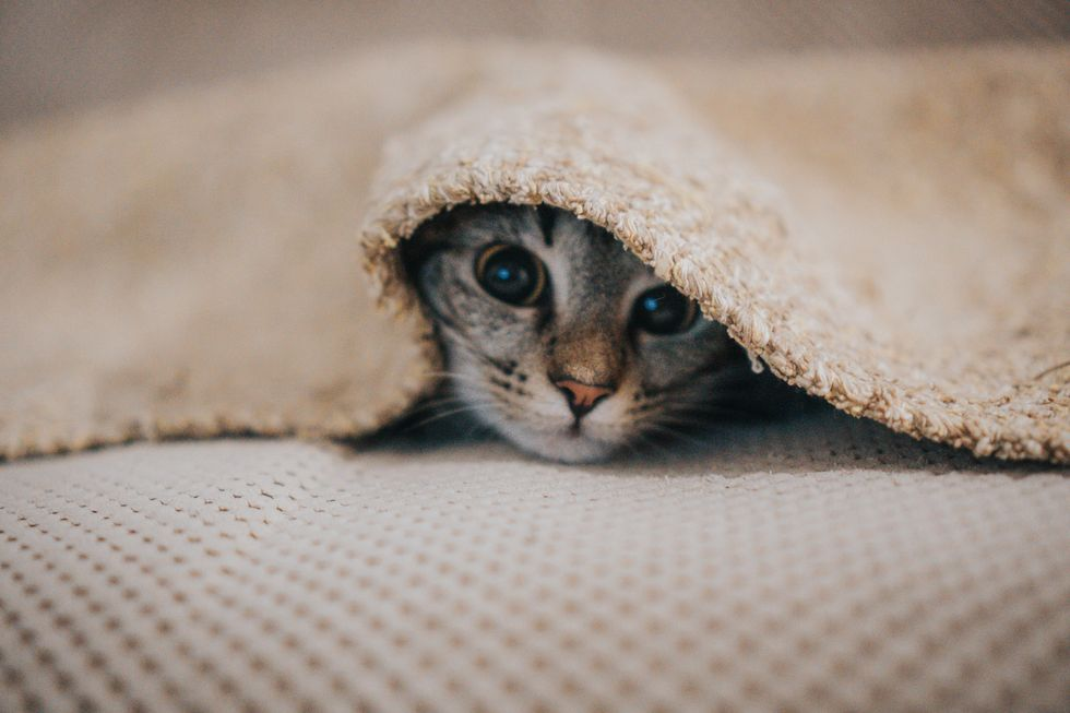 Coronavirus in cats contagious to dogs