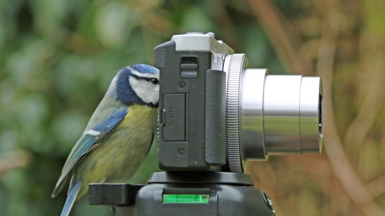 Beat the COVID-19 Blues With These Wildlife and Nature Livecams