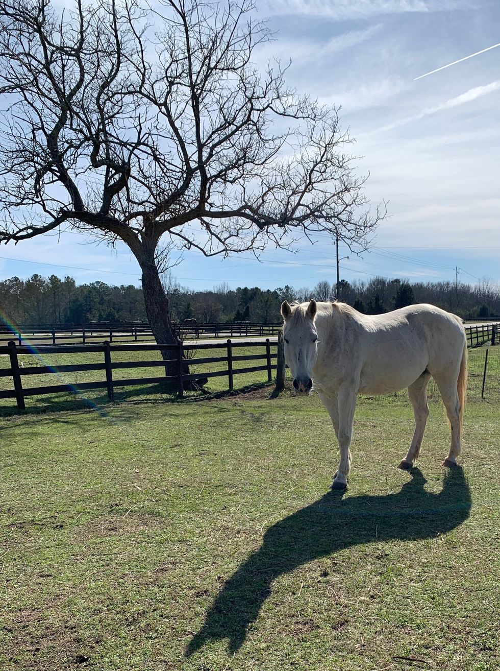 Meet My Horse: Bonnie Blue Who Lives In Alabama