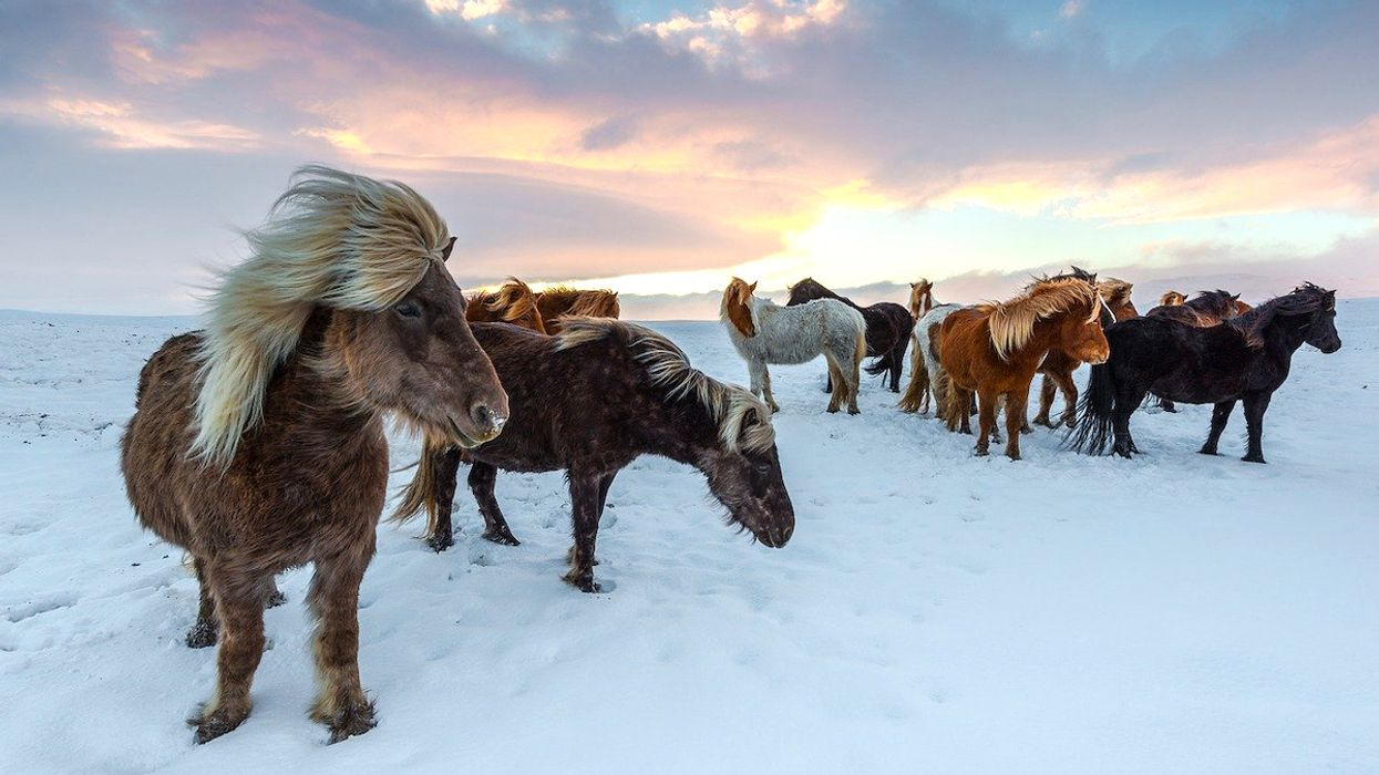 Horses Might Stop the Permafrost From Melting
