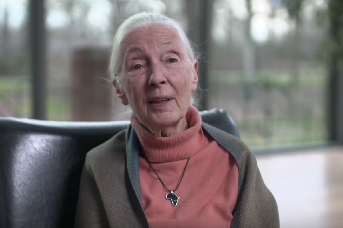 Jane Goodall speaks some hard truths to the people of China about the Coronavirus