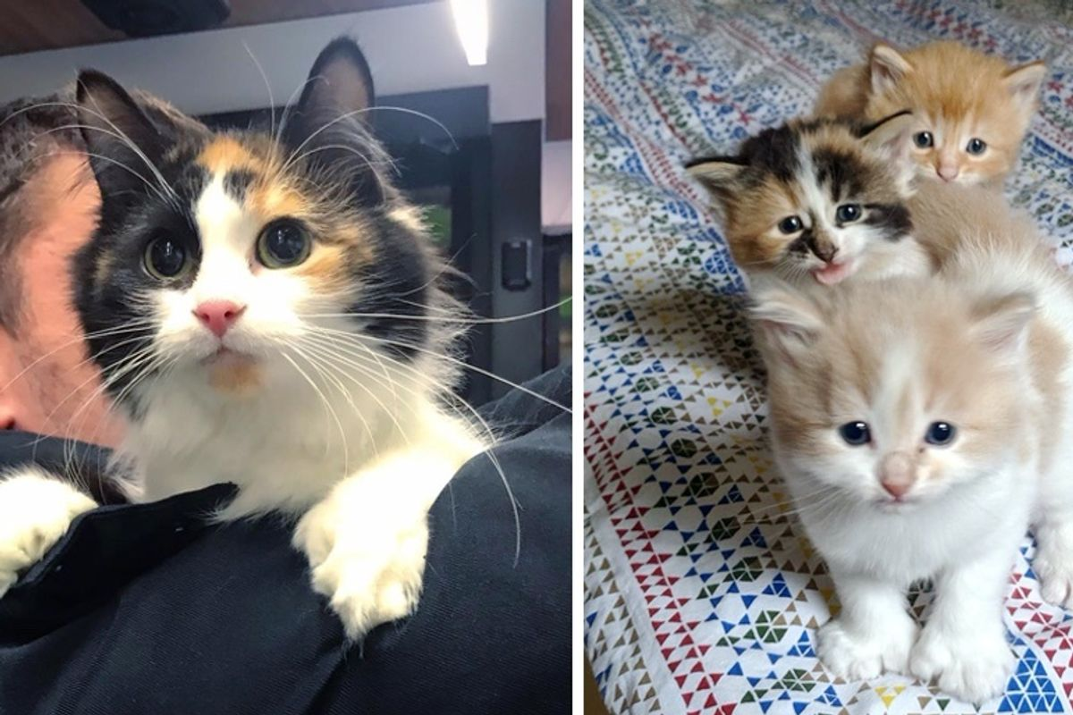 Man Helps Stray Cat Just in Time So Her Kittens Can Have a Better Life