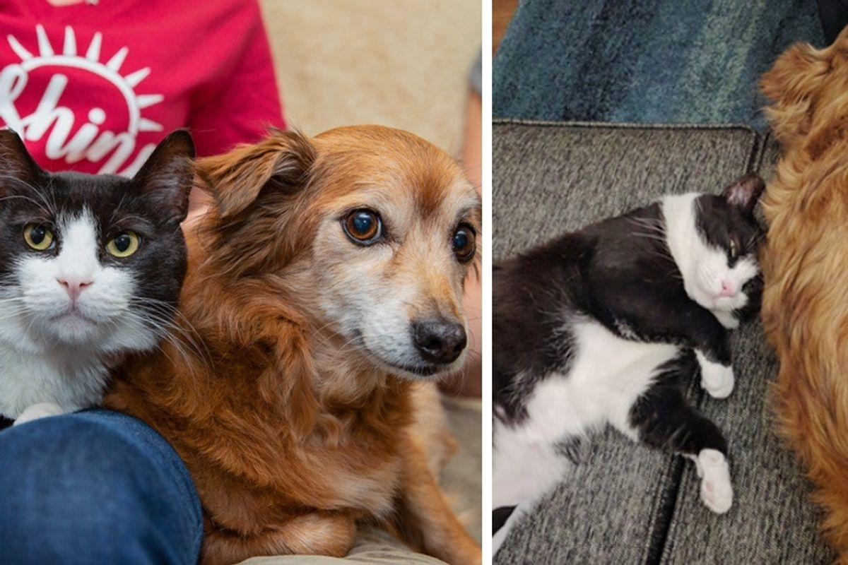 Cat Befriends Family Dog and Insists on Being Adopted by Them