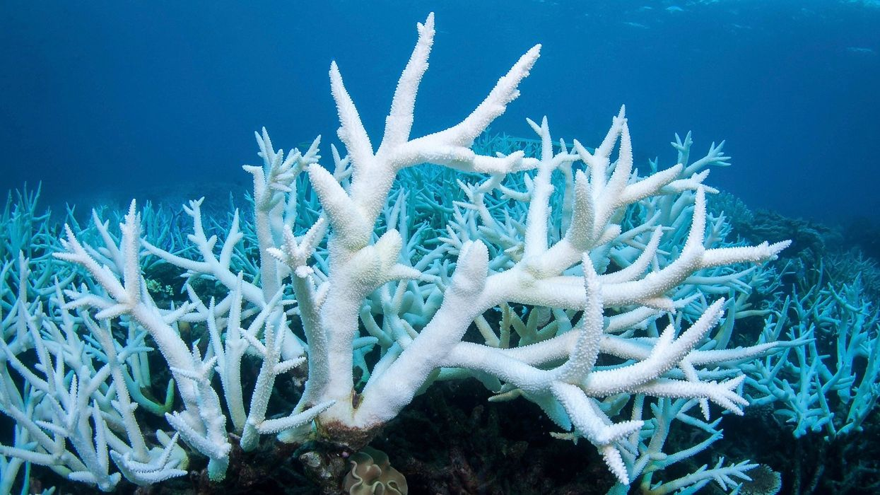 Great Barrier Reef Has Third Major Bleaching Event in Five Years