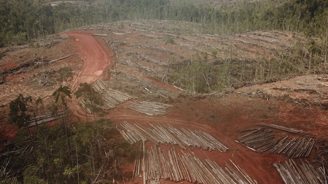 New Player Begins Clearing Rainforest for World's Largest Palm Oil Plantation
