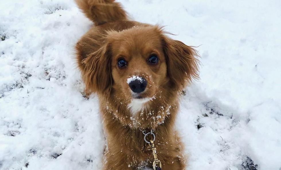 Meet My Dog: Maddox, A Dachshund-Cocker Spaniel Mix Who Lives In Texas