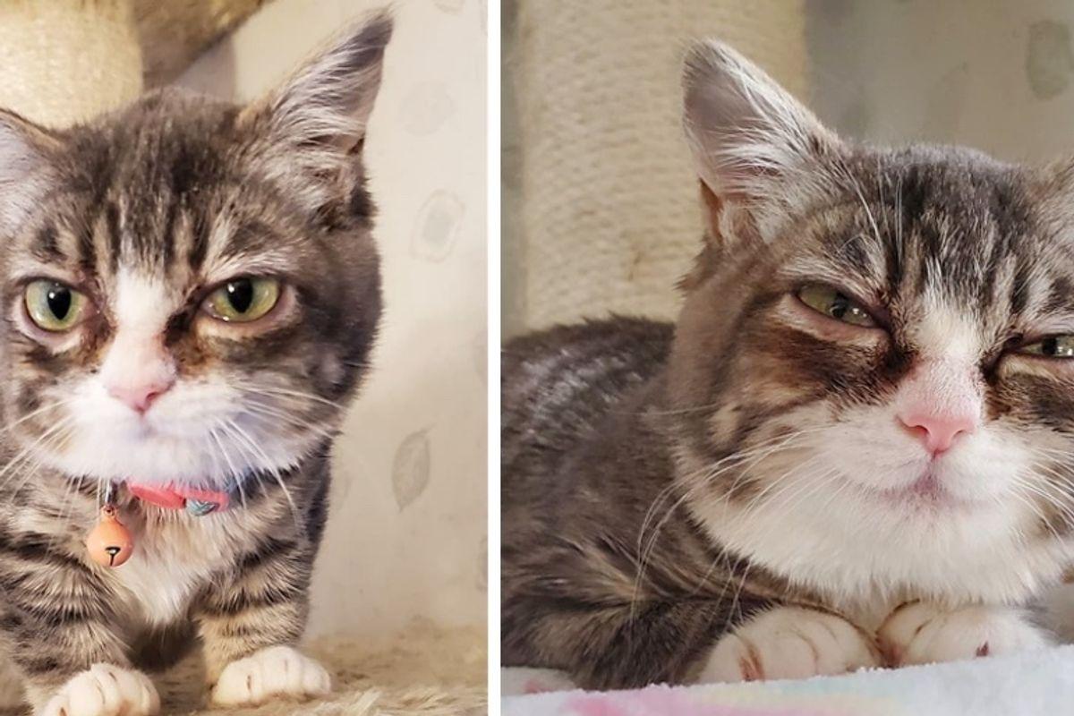 Kitten With Rare Condition is So Happy When She Has Her Dream Come True