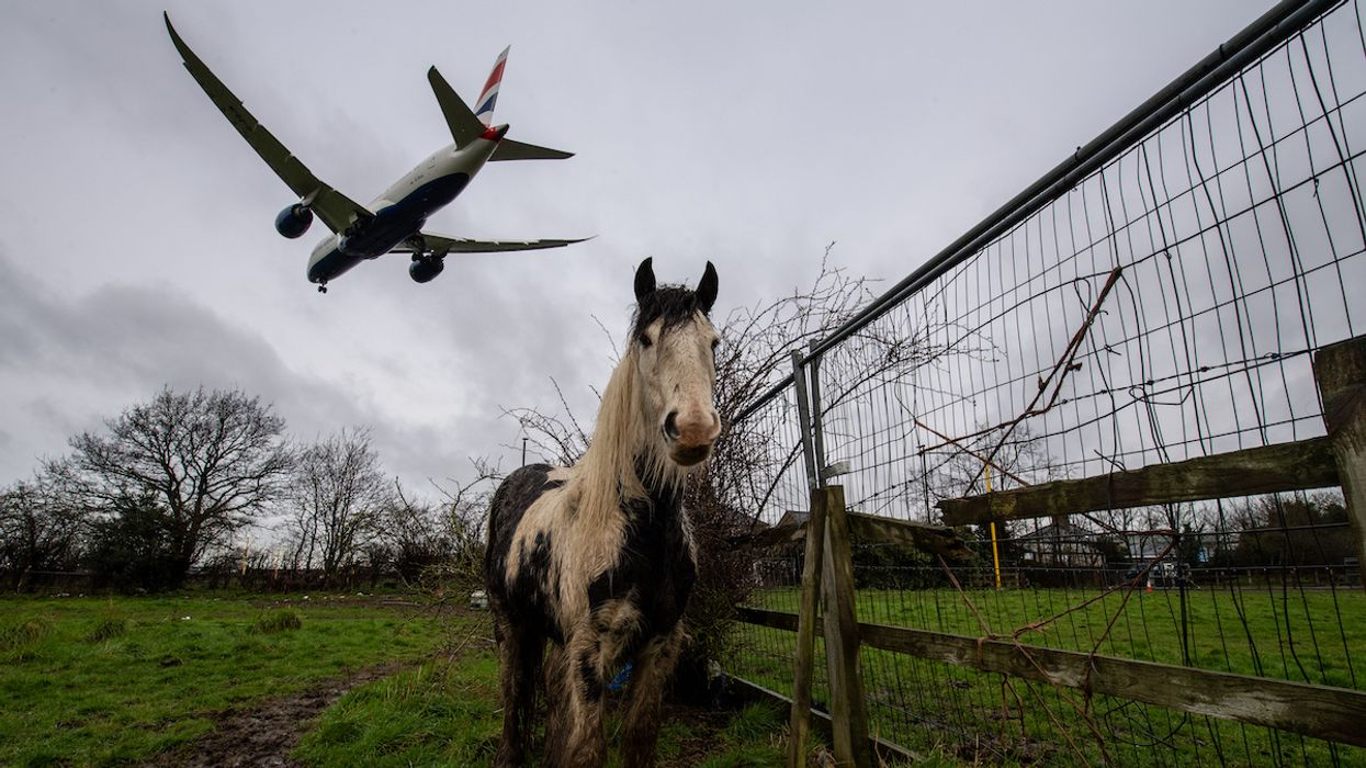 Blocked Heathrow Airport Expansion Celebrated by Climate Activists