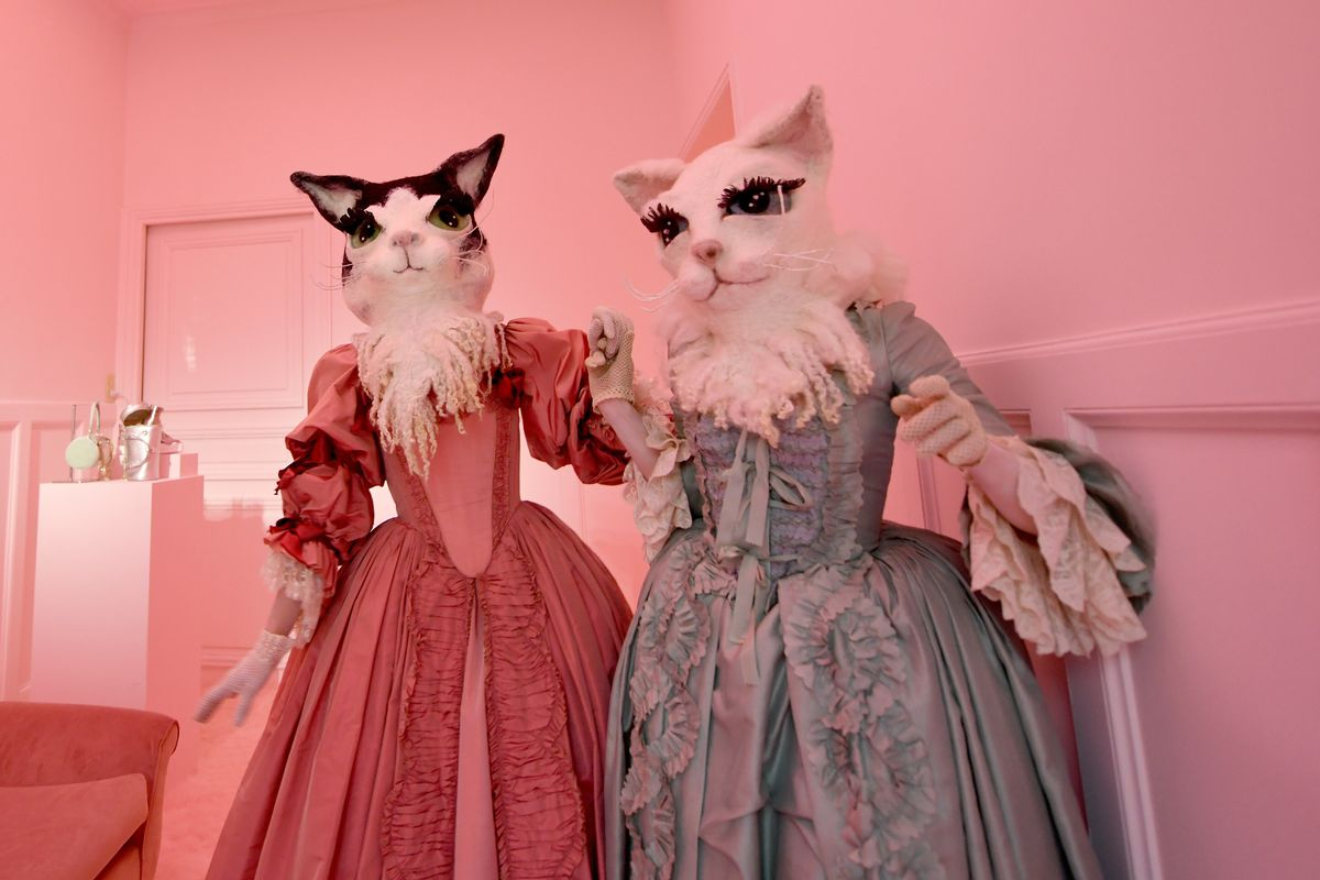 Cats Can Have a Little Fashion Week, As a Treat