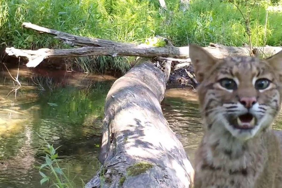 Pennsylvania man's wilderness camera captures all walks of life crossing log bridge