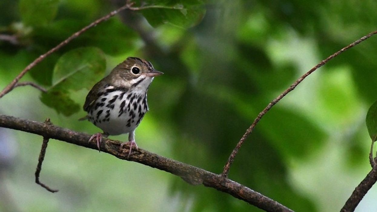 Using Sound to Help Imperiled Species and Ecosystems