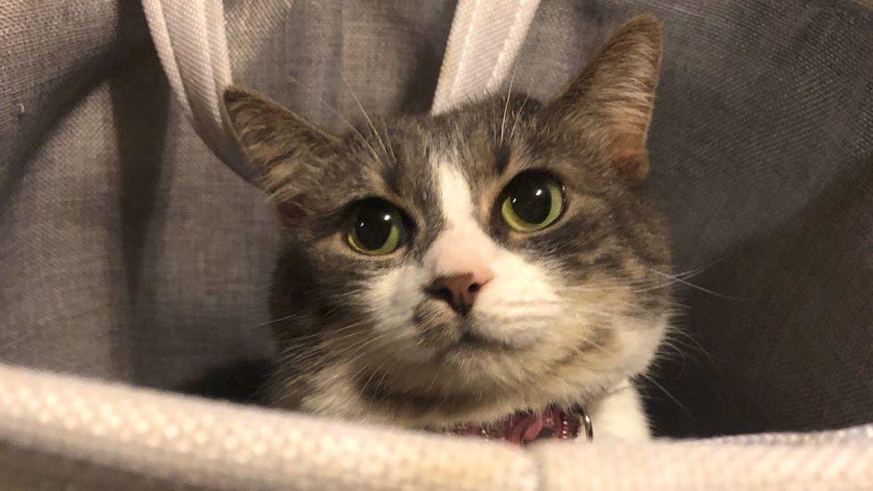 Meet Poki, My Silly Striped Cat