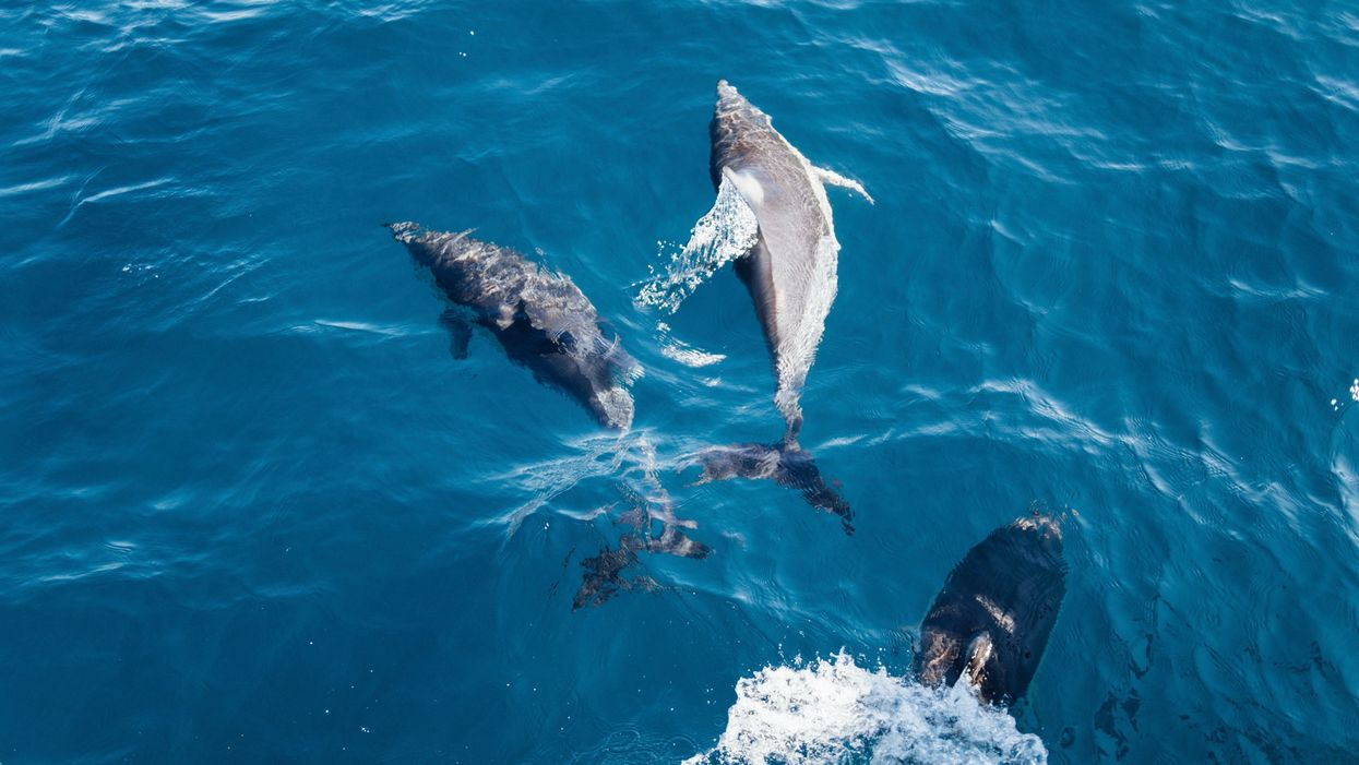 10 Surprising Dolphin 'Superpowers'