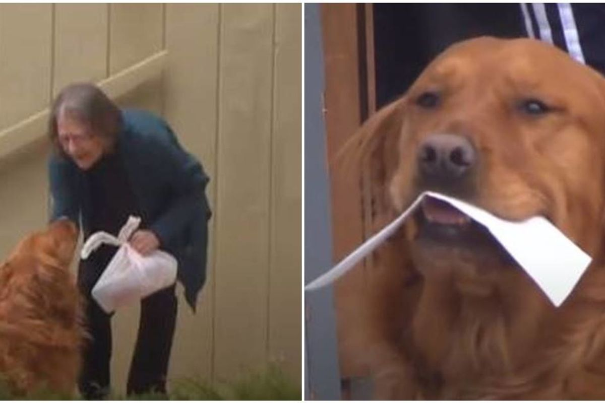 A dog in Colorado is delivering groceries to his elderly neighbor with respiratory problems