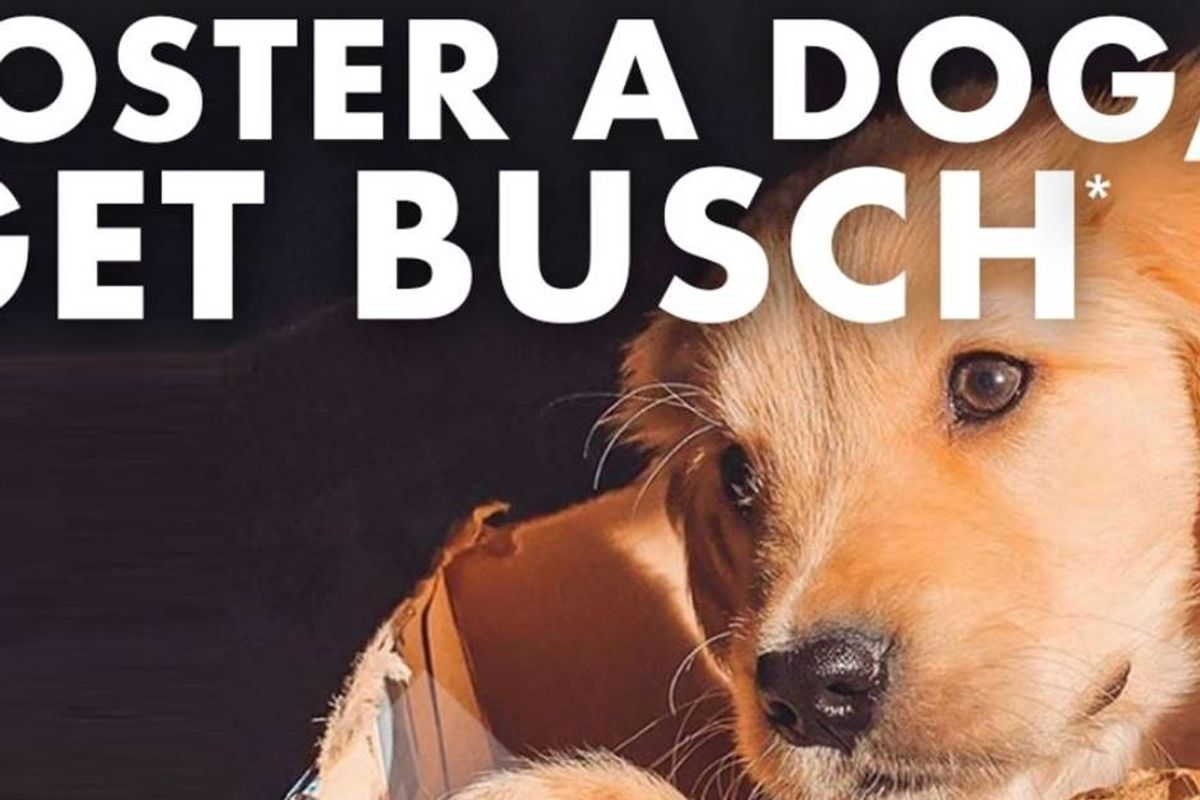 Busch is giving free beer to people who rescue shelter dogs during the coronavirus crisis