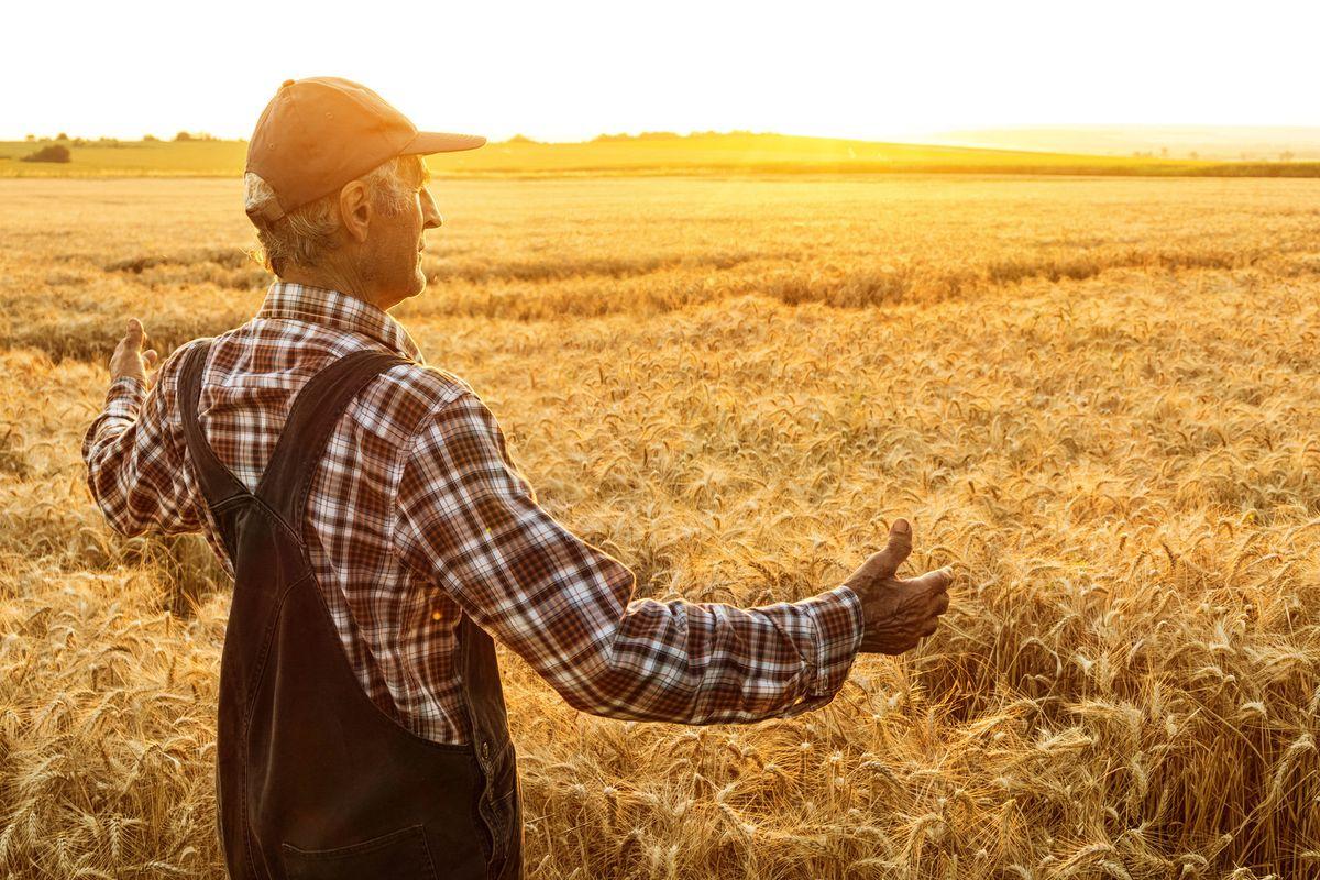 Rischi di una pandemia alimentare da grano