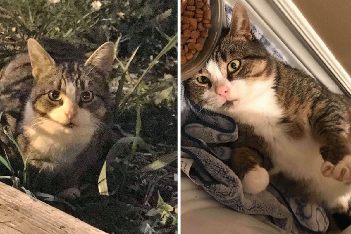Stray Cat Waits Outside the Perfect Home for Help