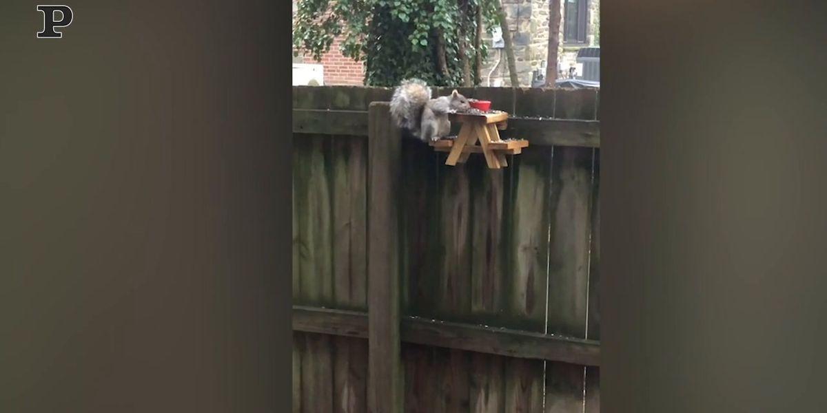 Un adorabile scoiattolo mangia ad un tavolo da pic-nic