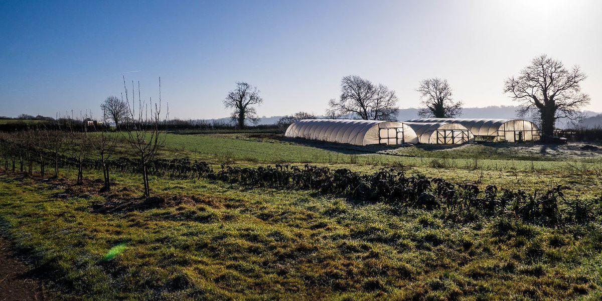 Organic farm UK