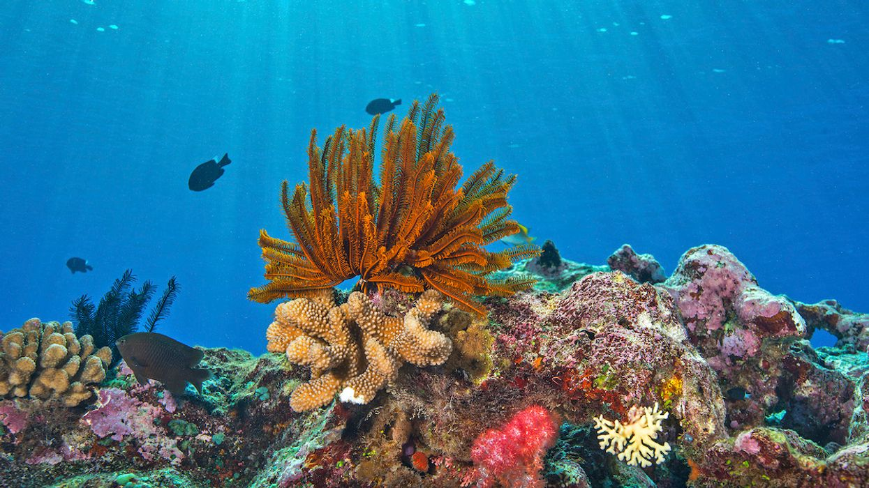 Coral Reef Tipping Point: 'Near-Annual' Bleaching May Occur Globally, Scientists Say