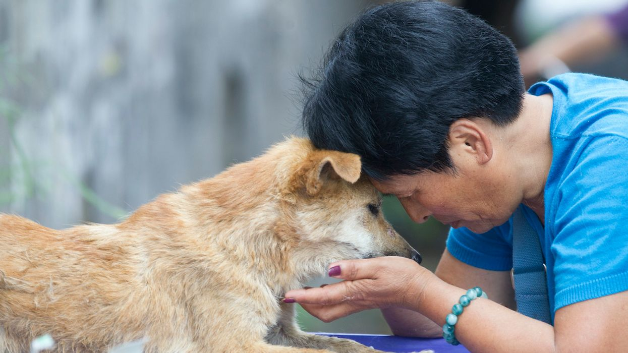 Shenzhen Is First City in China to Ban Eating Cats and Dogs