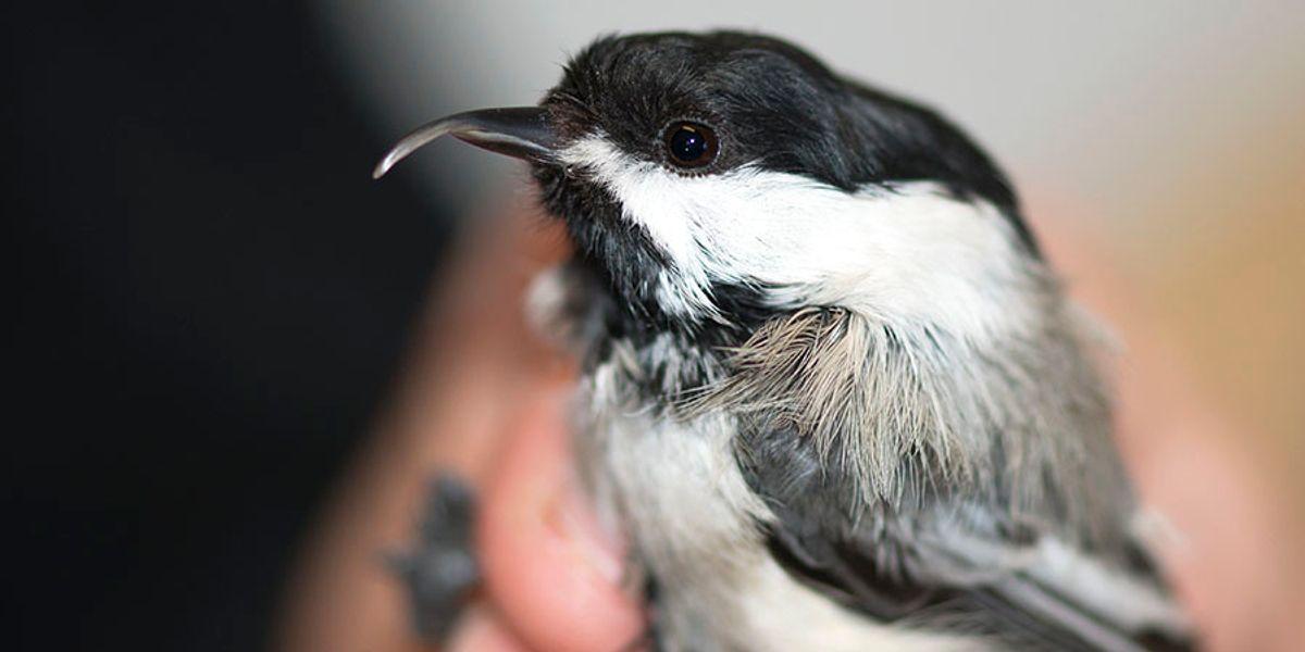 Winged Warnings: Twisted beaks