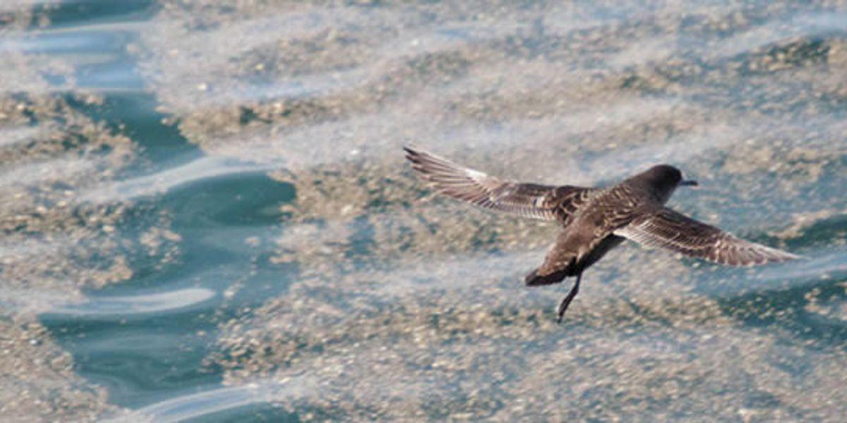 Winged Warnings: A perilous journey