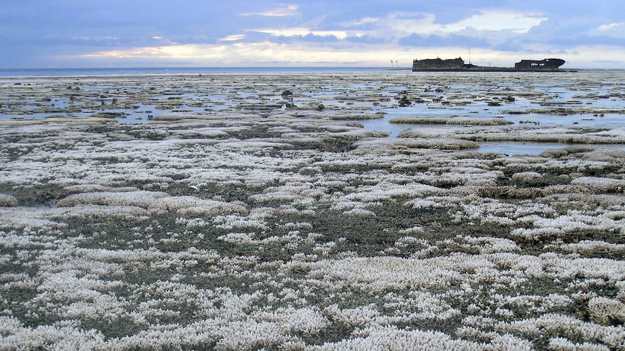 2020 Great Barrier Reef Bleaching Event Is Most Widespread to Date