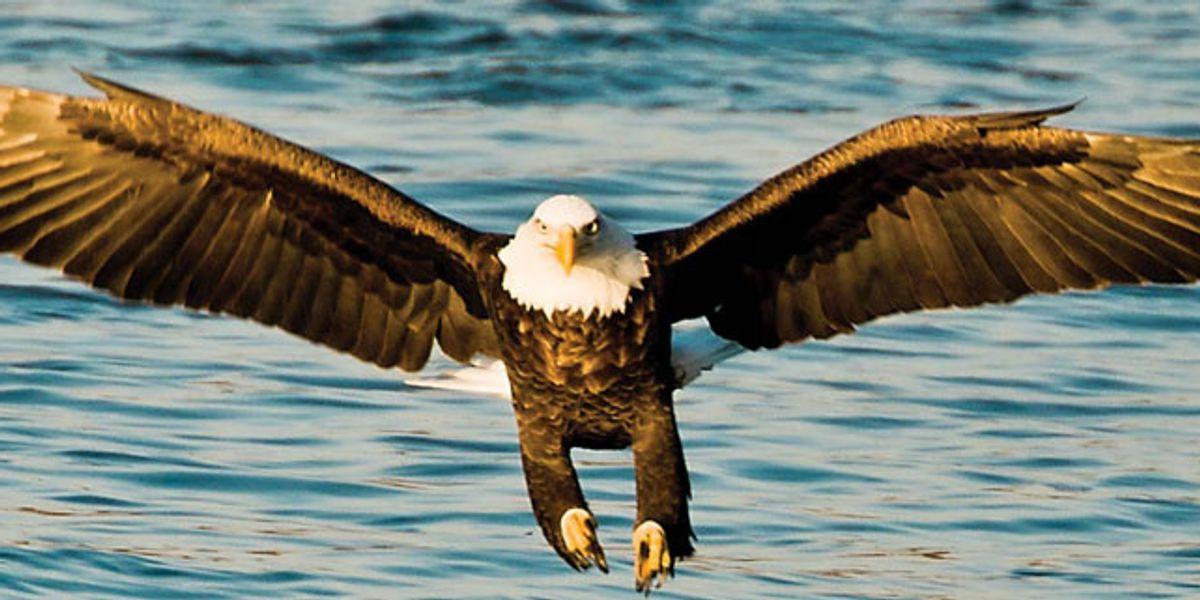 Opinion: Lakota values soar with the eagles