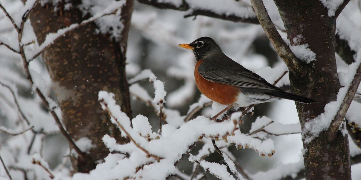 Songbirds dying from DDT in Michigan yards; Superfund site blamed
