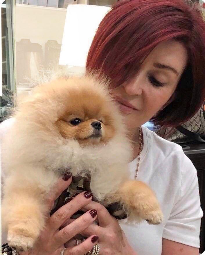 \u200bSharon Osbourne and her Pomeranian Bella.