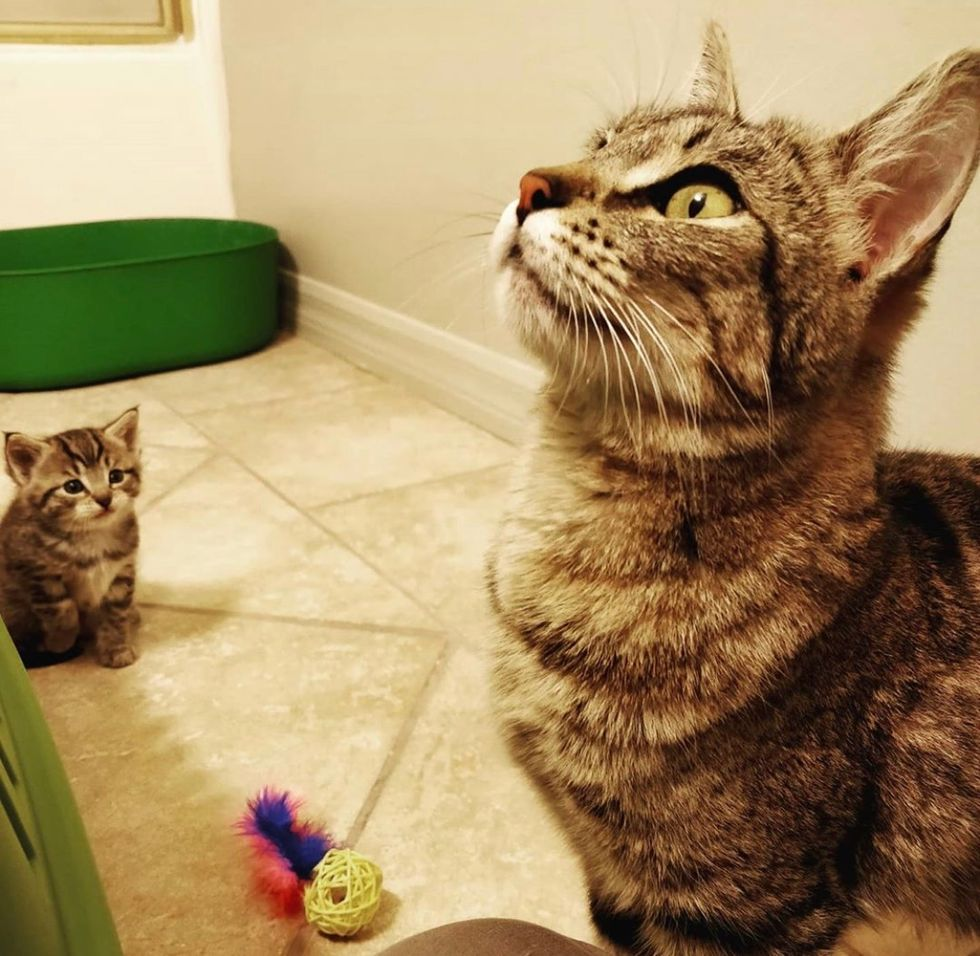 img Cat is So Happy to Find Help for Her Only Kitten - Her Little Mini-me