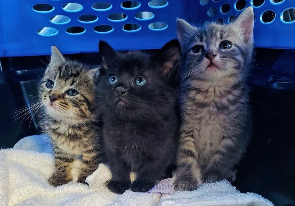 img Kittens Found in Plumbing Shop, are Rescued in the Nick of Time