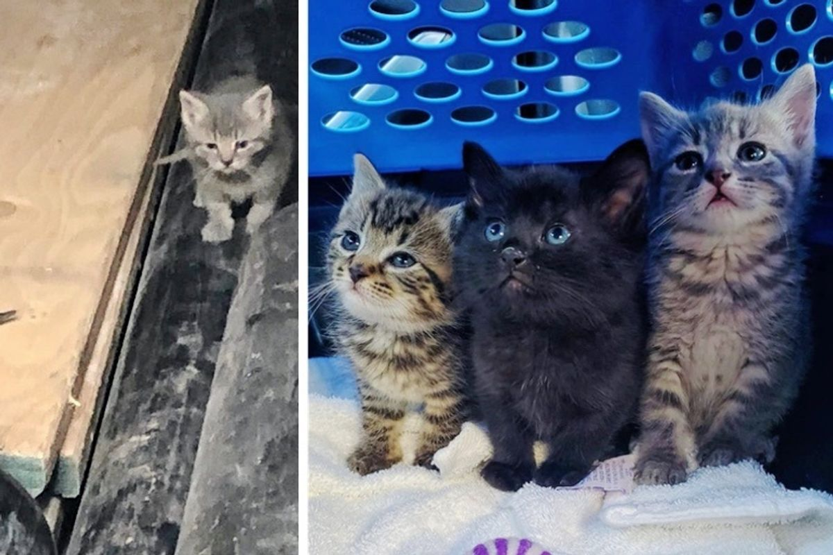 Kittens Found in Plumbing Shop, are Rescued in the Nick of Time