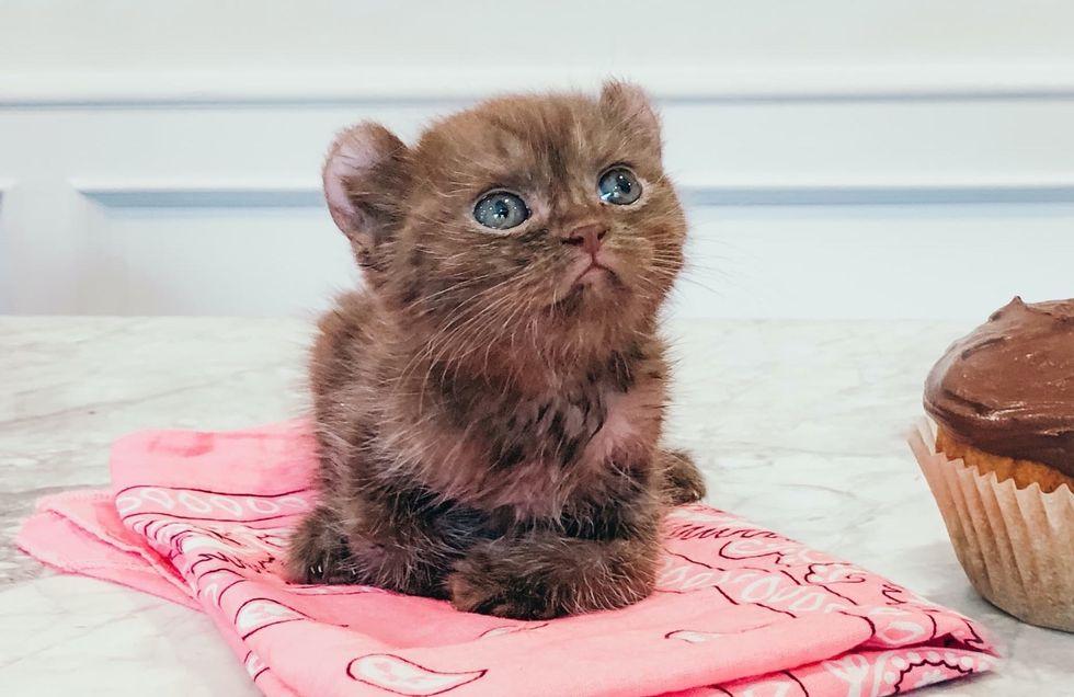 cute, kitten, twisted legs