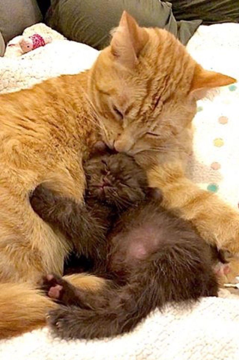 cat, kitten, cuddle