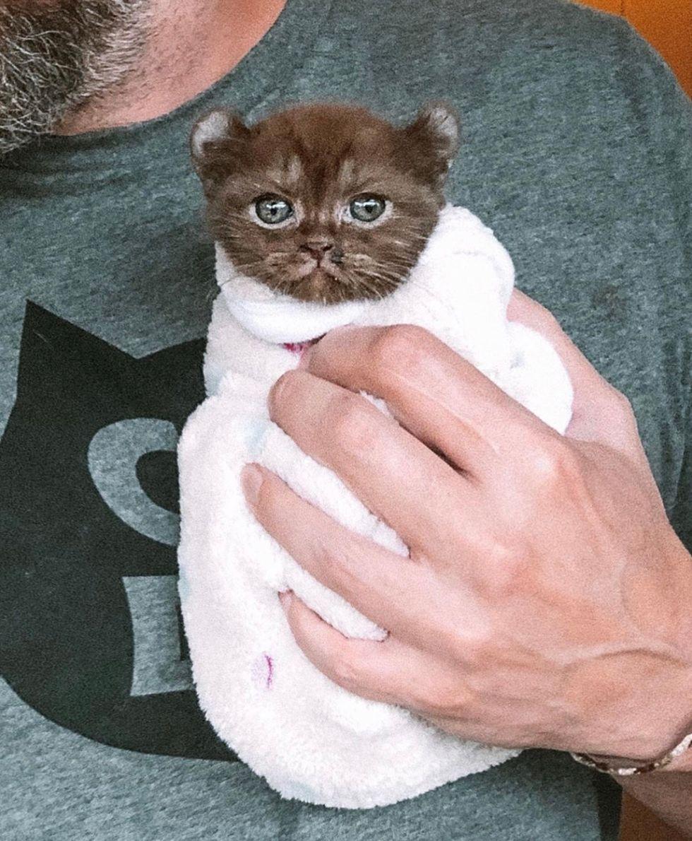 purrito, cute, kitten, cuddle