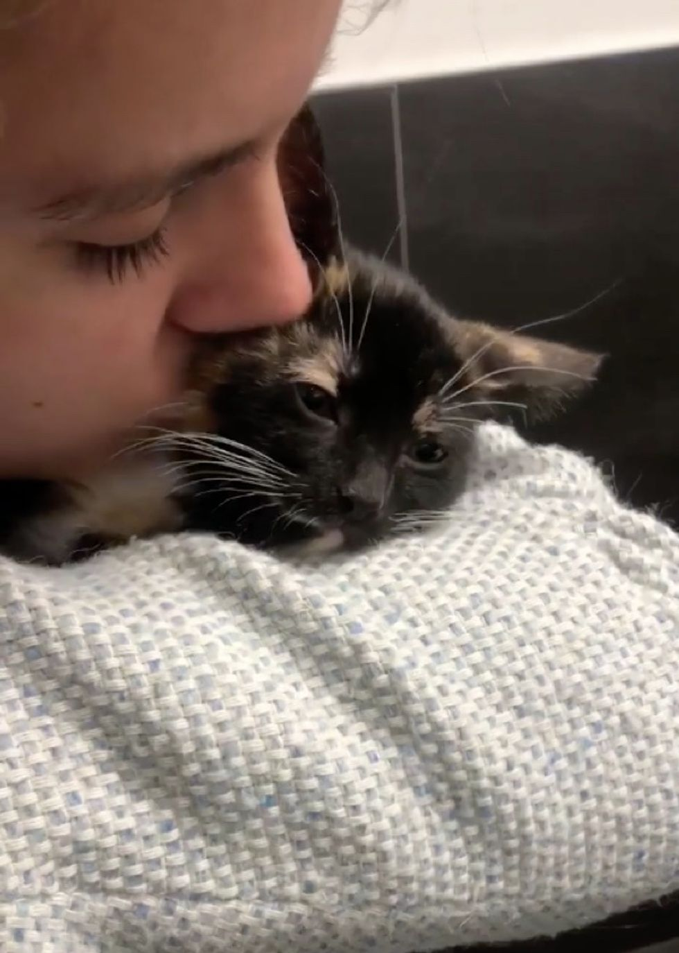 kitten, cute, calico, kiss