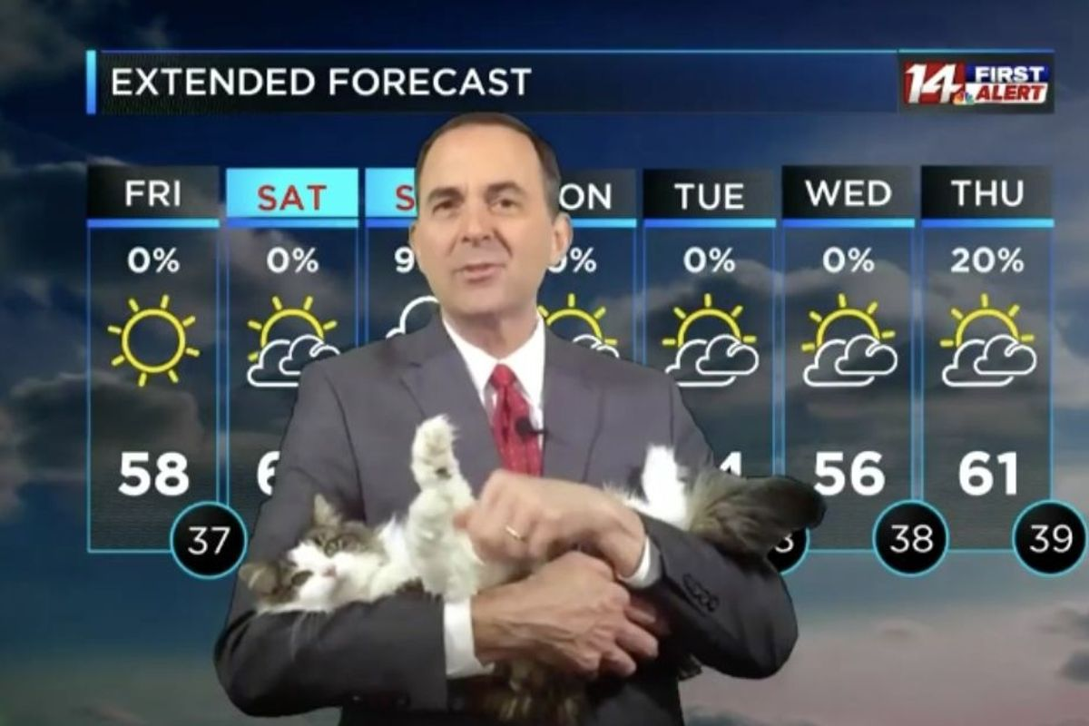 A meteorologist's cat bombed his at-home forecast. Now Betty is his beloved co-host.