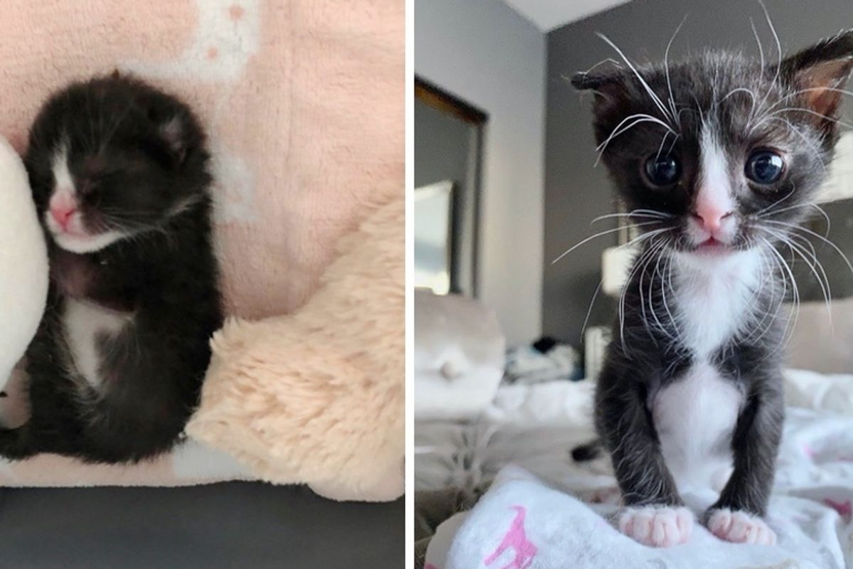 Kitten Brought Back from the Brink, is Determined to Thrive