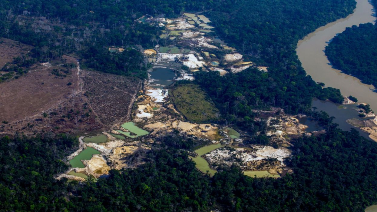 Brazil's Amazon Rainforest Has Become the Wild West for Illegal Gold Miners
