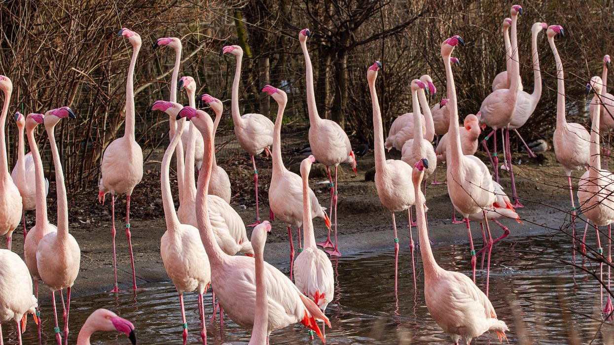 "Flamingos form long-term friendships and ""cliques"""