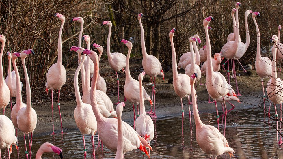 Flamingos form long-term friendships and  cliques